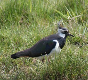 inpraiseofbirds_logo